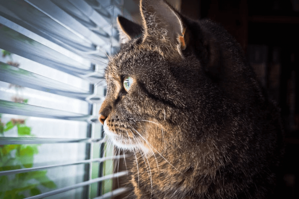 Motorised window blinds: do's and don'ts